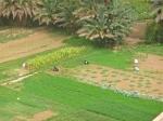 Farmers - Morocco