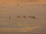 Camels and guide - Erg Chebbi - Morroco